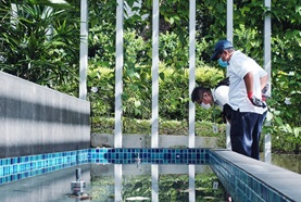 NEA dengue inspection officer checking water feature
